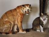 這貓的志向很大