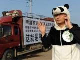 熊貓糞便製茶能抗癌? 還可能成為世上最貴茶葉? 你會買嗎?
