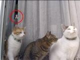 貓兒也有靈
