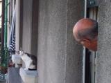 嗨,猫咪!嗨,老头?