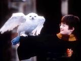 哈利波特感動十年 小寵物難說再見