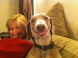 這隻狗有明星的風範