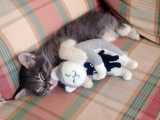 午睡中... 有二只睡不著 ~  超可愛的說!