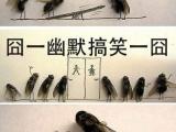 蒼蠅的寫真