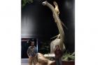 新化石出土 史前美國最大恐龍現身