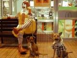 麥當勞叔叔的最新服務