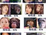 蔡依林與猩猩的相似度