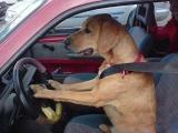 開車出去兜兜風