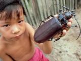 世上現存的巨大昆蟲