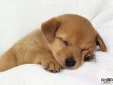 [感人] 小狗出售