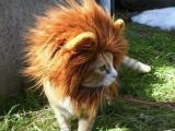 獅子不發威你當我是小喵嘛 !