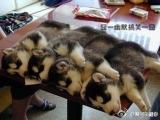 真有狗狗這樣睡覺的嗎?