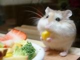 吃。。。吃。。。吃。。。