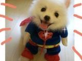 動物搞笑圖片超人狗狗