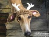 我是最可愛的聖誕鹿!!