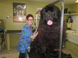 個體比人還大的狗!