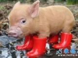 下雨了,媽媽說要穿雨鞋