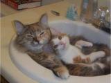 看啥? 沒看過洗鴛鴦浴?