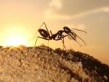 螞蟻為什麼不會迷路?