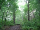 森林的5大功能