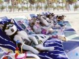 哈!哈!一群色狼在海灘上打望