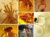 琥珀中的七種神秘遠古動物