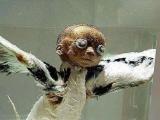 南非發現長翅膀人形怪物