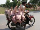 超屌 !!  猛豬,猛車,猛人。