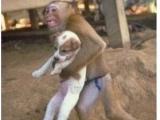 猴子抱狗逃命