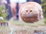 貓咪毛球~~