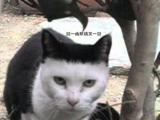 看甚麼看 沒看過剪壞劉海的貓咪