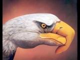你看過這樣的鷹嗎?