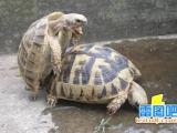 烏龜在做!