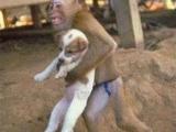 你竟敢搶我馬子,我搶你孩子!!!