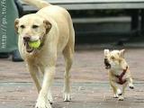 把 球 還 給 我!
