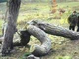 好有意思的樹喲