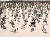 驚人的《鋼鐵花園》 好美麗可是感覺好危險?