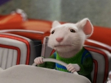 關於老鼠的十四個冷知識
