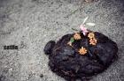 一朵鮮花插在牛糞上