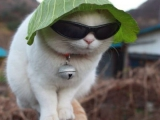 陽光強...就是要戴墨鏡加帽子