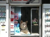 賣菸的小賣店的老闆