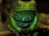 研究:青蛙皮膚中成分可治療癌症