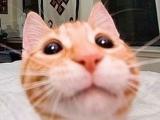 可愛貓 QQ