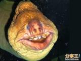 悉尼水族館內驚現長相駭人的怪魚