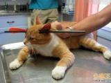 好痛  小貓被箭刺穿頭部 好險沒死