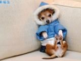 狗狗的冬裝
