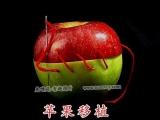 在一次交通意外中,紅蘋果不幸失去了下肢......