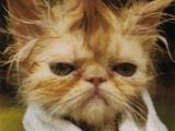 貓貓新髮型
