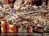 非洲巫師使用專屬的材料市場