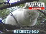 流鼻涕的貓
